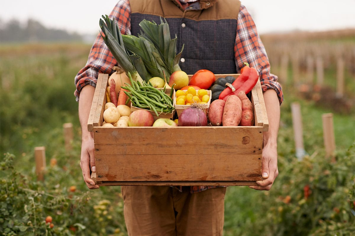 Top Agriculture WordPress Themes that Will Boost Your Eco Business