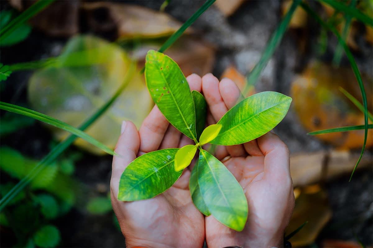 Top 10 Environmental and Non-Profit WordPress Themes