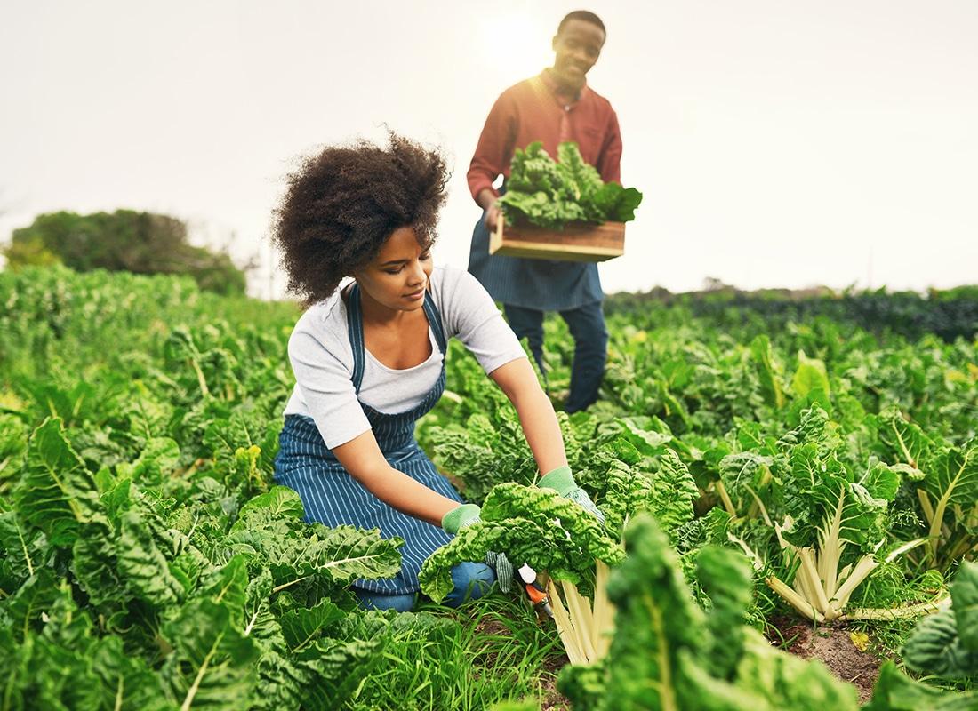 Best Eco and Organic Farming WordPress Themes